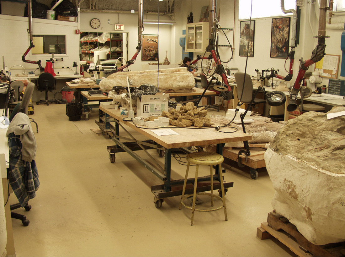 The first floor lab where Fitzgerald prepares fossils. Photo courtesy of Paul Sereno.