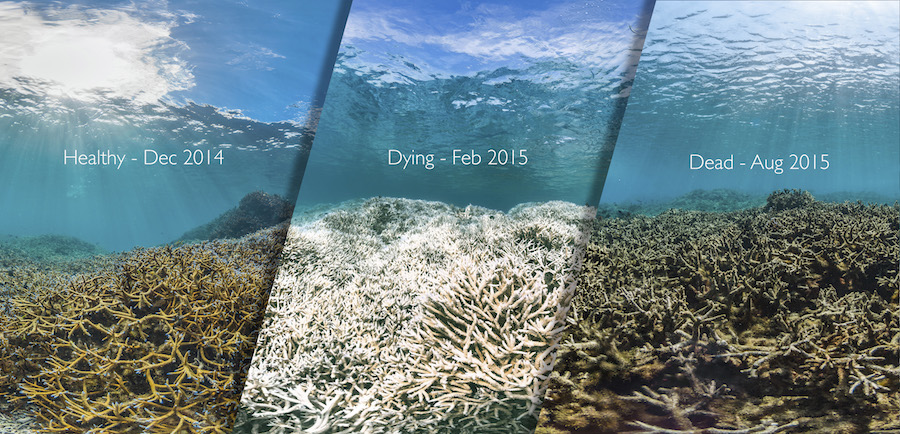 A coral reef in American Samoa before, during and after a bleaching event. (XL Catlin Seaview Survey)