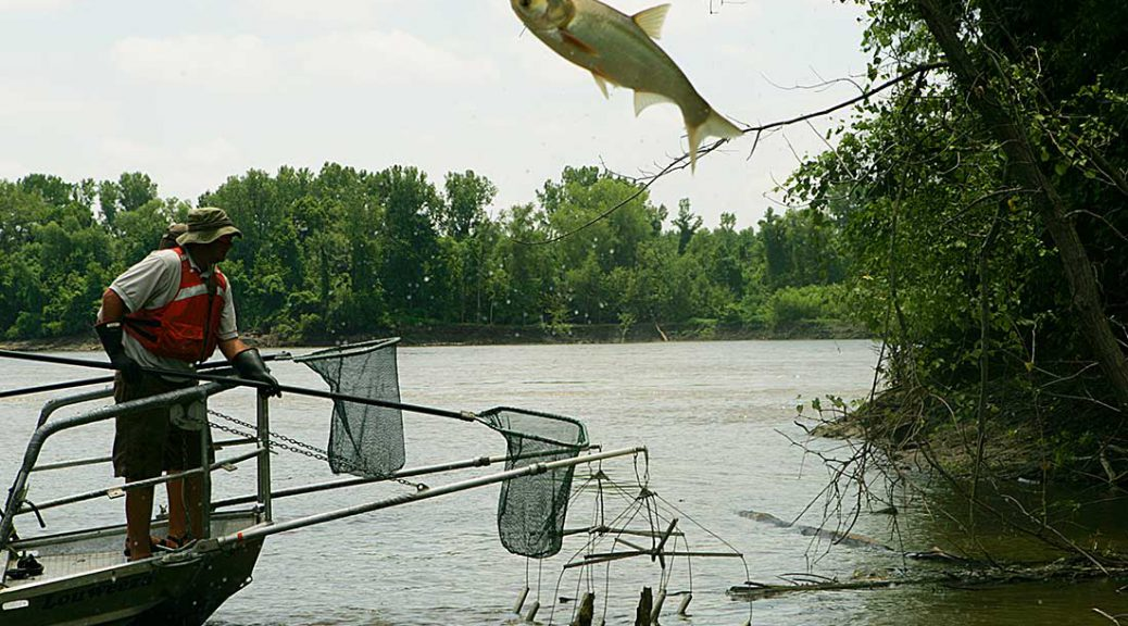 Controlling Asian carp remains a challenge