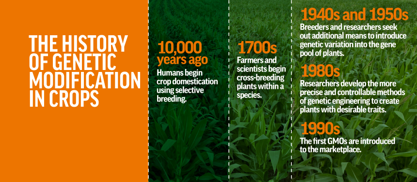Contrary to popular misconception, people have been genetically modifying crops for thousands of years. (GMO Answers)