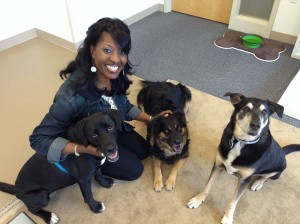 Reporter Angela Barnes hangs out in UAMS Canine Detection Training room with dogs.  From left: Bella, Sophie and Frankie.  (Angela Barnes/Medill)