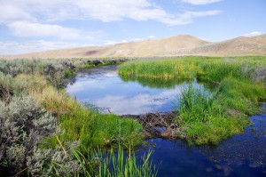 Taken from the same place as the 1980 photo of Maggie Creek, this 2011 image shows the stream's transformation. (Photo credit: BLM, Elko District)