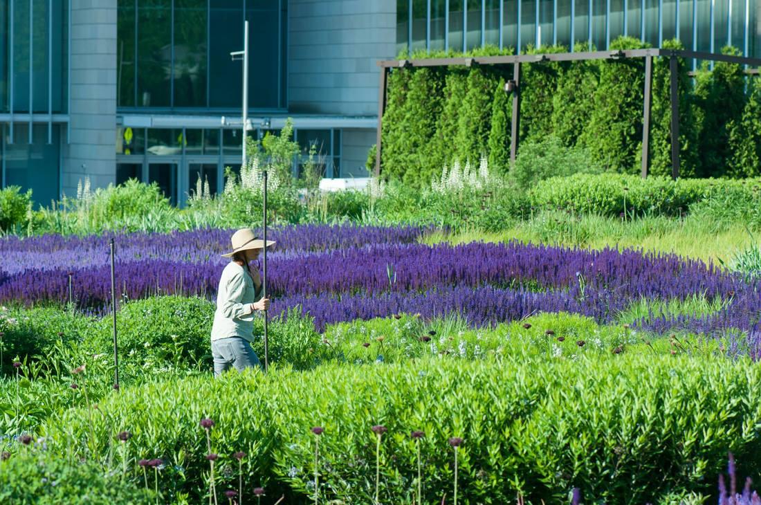 The Lurie Garden at MillenniumPark