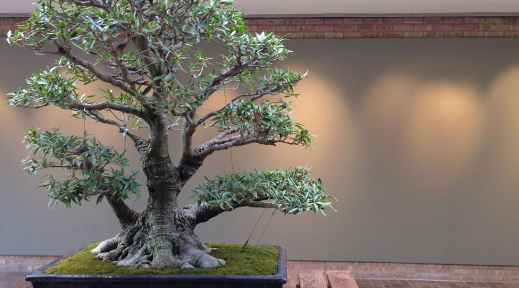 bonsai-web-1