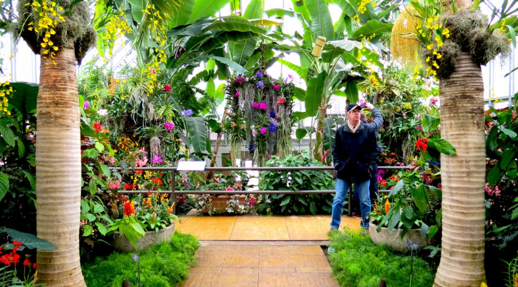 Orchid Show Blooms Away Winter Chill Medill Reports Chicago