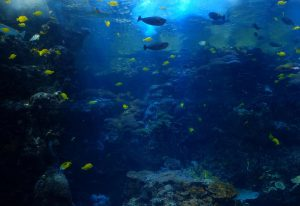 The ocean is one of the most biodiverse ecosystems
