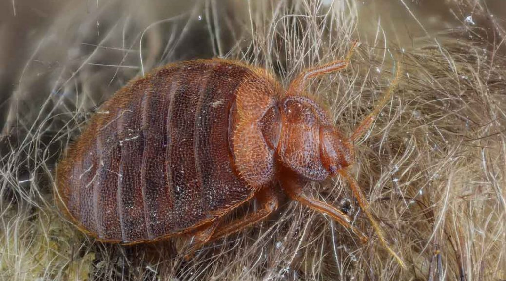 Bed bugs hurt us more than we think